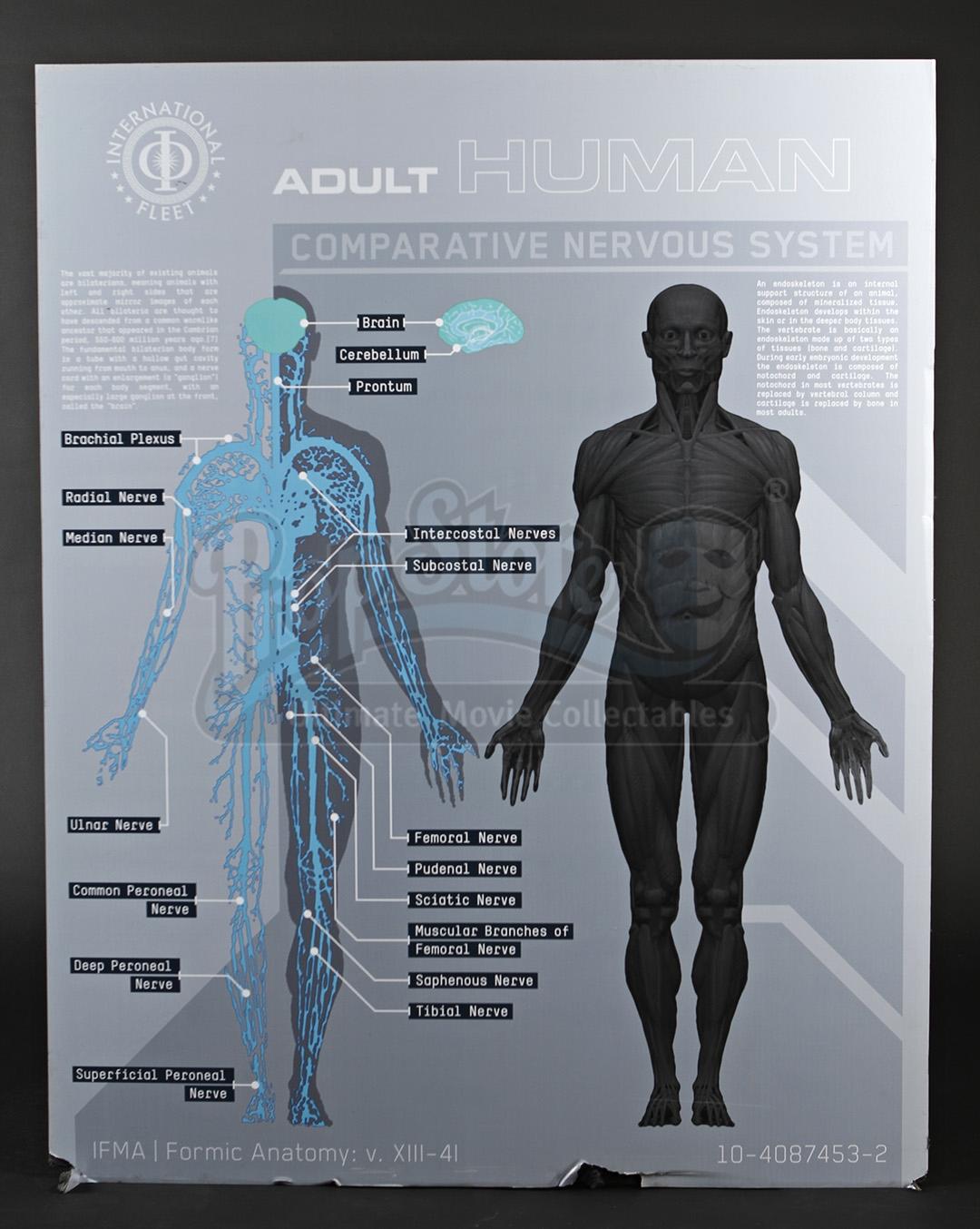 Enders Game Adult Human Anatomy Diagram Current Price 15