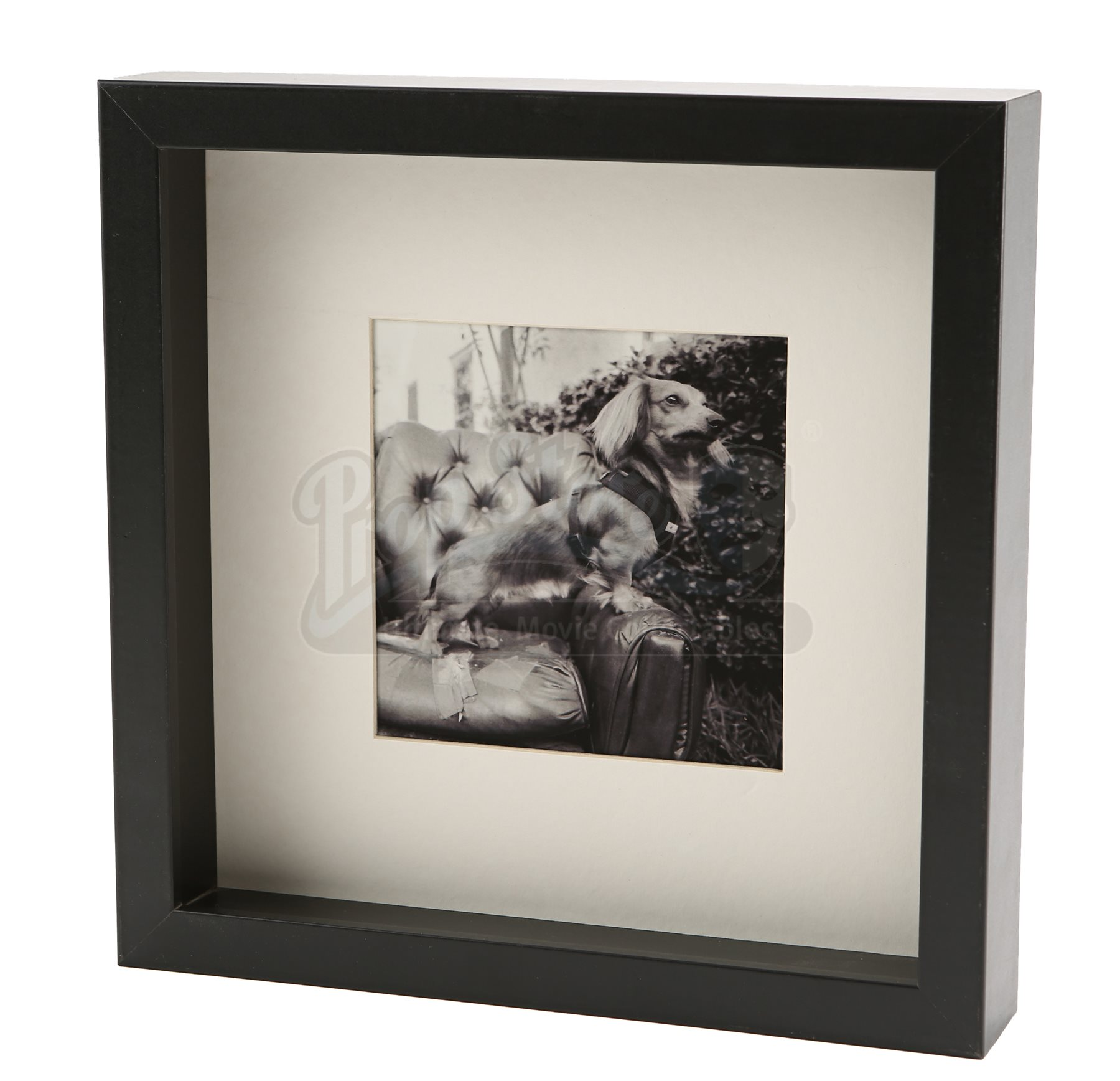 Cullen house framed dog photograph current price 450 for Twilight house price