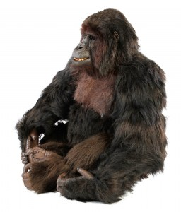 61.Complete Gorilla Jody St. Michael Costume Display