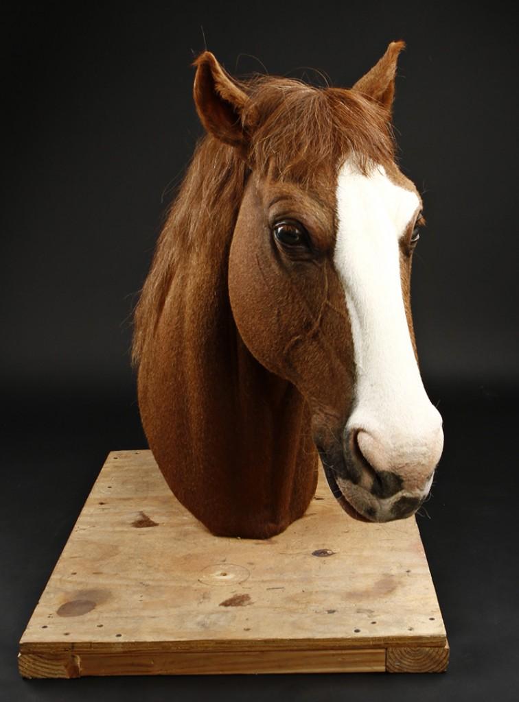 Django_Horse_Head_1