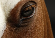 Django_Horse_Head_7